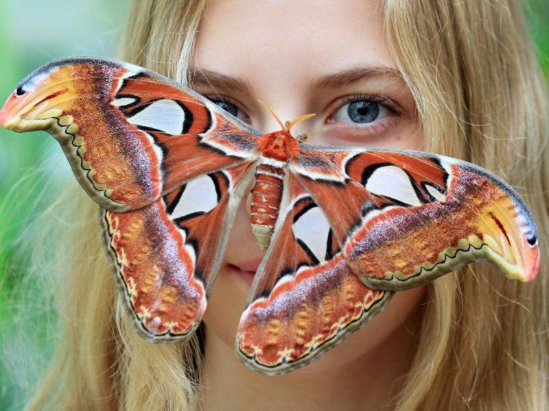 Le plus grand papillon au monde - Quel est le nom le plus porte au monde ...