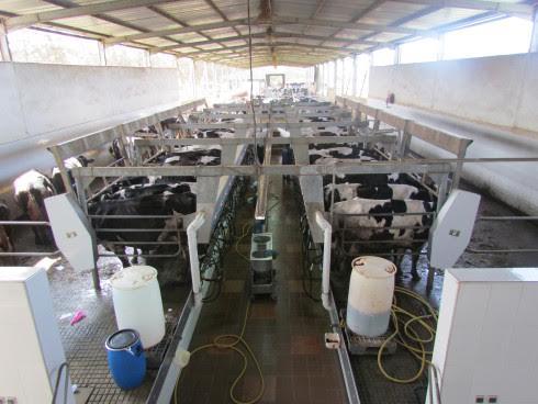 Maroc: La production laitière a doublé en 10 ans atteignant 2,5 milliards de litres