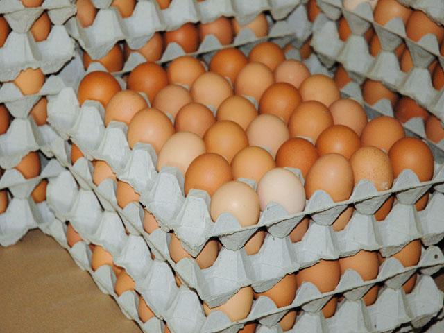 L'ONSSA rassure sur la qualité des œufs au Maroc