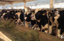 Boycott: Le gouvernement inquiet des dommages pour les agriculteurs