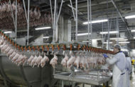 Ministère de l'Agriculture: Les importations de volaille américaine concernent uniquement les produits congelés et Halal